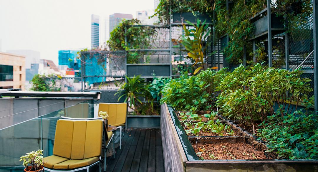 Cómo crear un huerto urbano en mi empresa